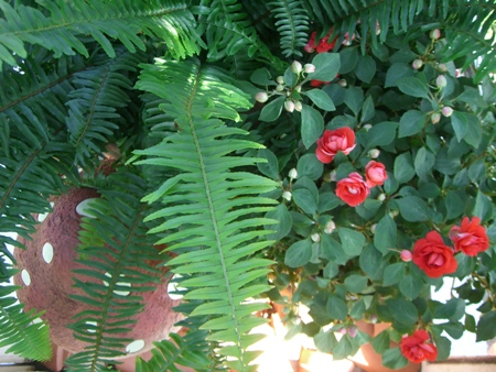Fresh beautiful ferns and flowers...