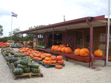 Pumpkin time...