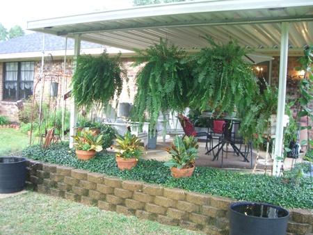 Pretty ferns...