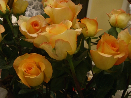 Pretty roses..