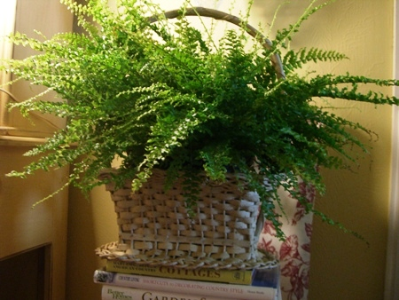 Fern basket...