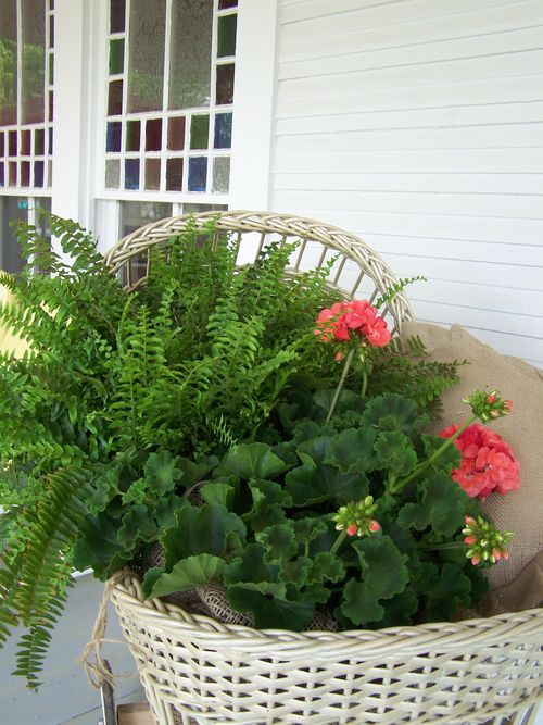 Ferns and geraniums...