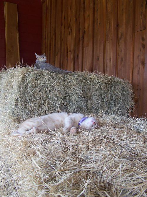 Jill Rigg's cats...