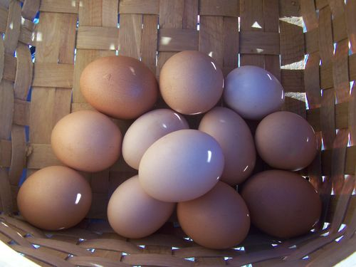 Brown eggs...