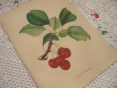 A_vintage_lithograph